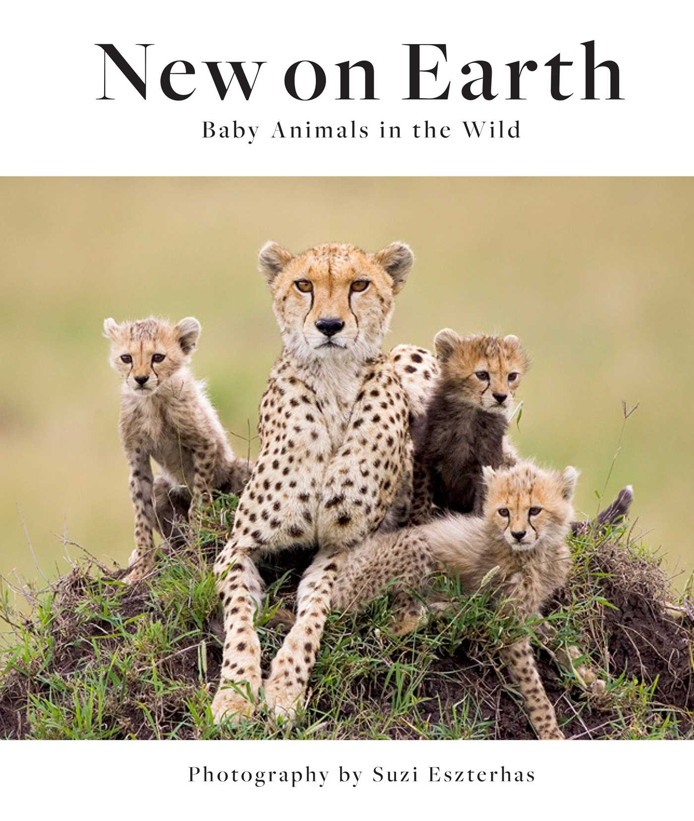 Picture of New on Earth