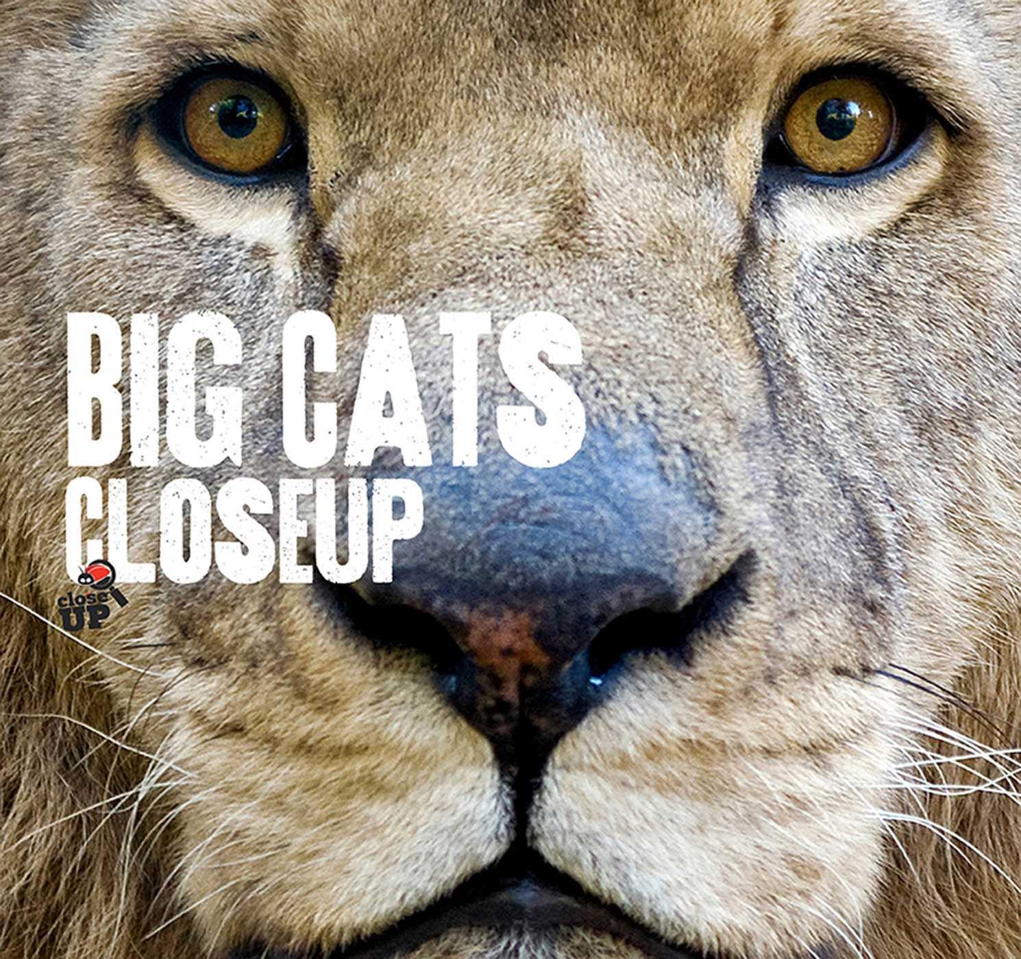 Big Cats CloseUp