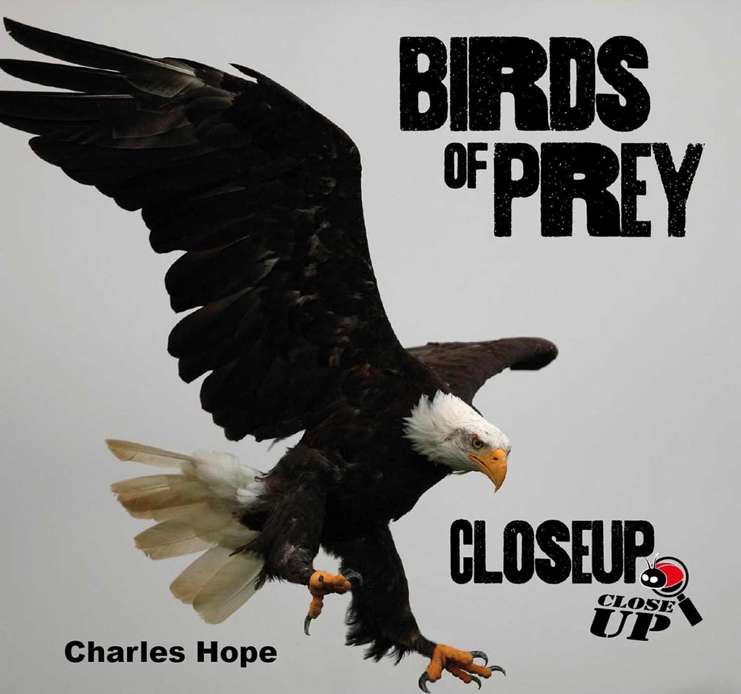 Birds of Prey CloseUp
